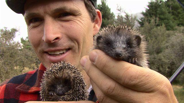 Adam and some baby Hedgehogs founds whilst rabbit shooting